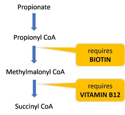 biotin B12 cofactors propionate