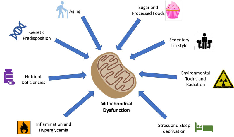 Intermittent Fasting and Mitochondria Function - Siim Land